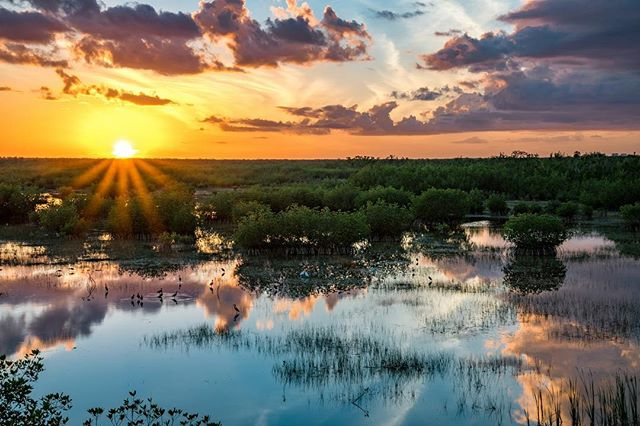 Happy Earth Day! Today, we celebrate nature- and for us, we celebrate wild Florida. We hope you'll join us this Earth Day by #optingoutside and experiencing Florida's wilderness, water, and wonder. 📷: Charles Patrick Ewing #conserveflorida