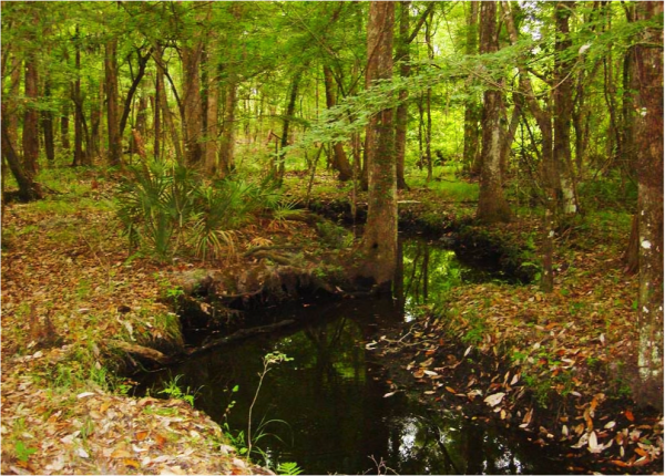 The conservation easement on the Nayfield's property helps protect the Suwannee River watershed. Your support helps CTF manage such conservation easements across the state.