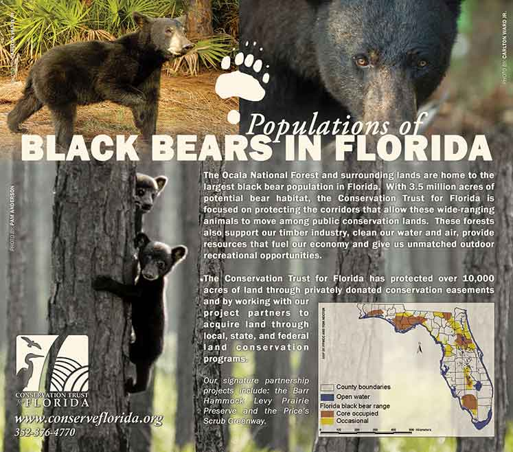 blackbear-pop-lg4web.jpg