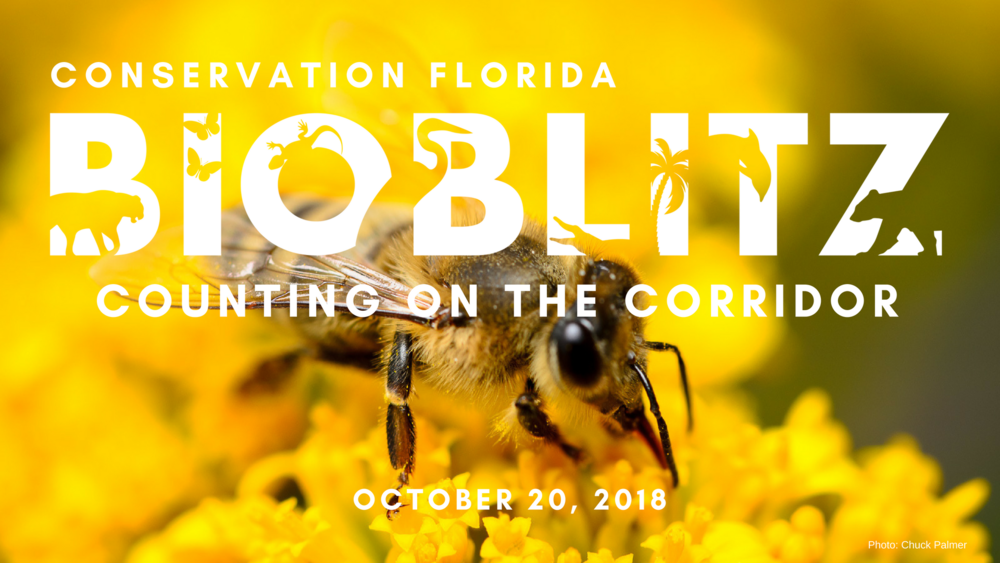 Bee Bioblitz FB Event Cover.png