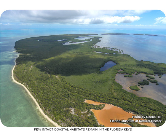 Few intact coastal habitats remain in the Florida Keys. Photo by Geena Hill.