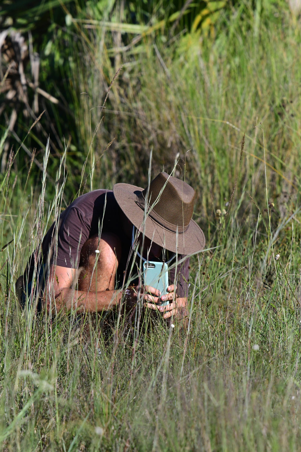 A participant at the Kissimmee Prairie bioblitz takes a picture with his phone to upload to iNaturalist for identification. Photo by  Ed Perry