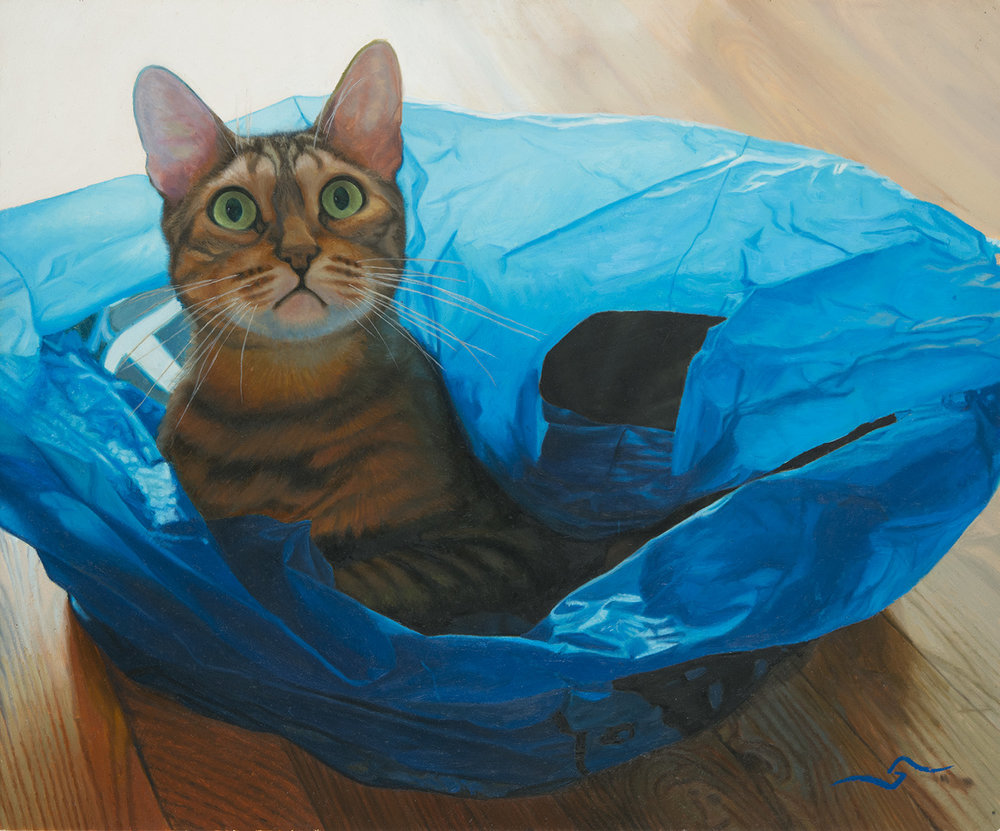 Cat in Blue Bag