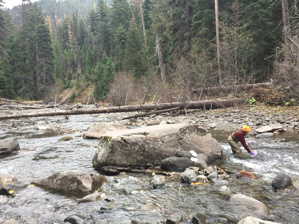 Collecting eDNA water samples - WA.jpg