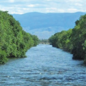 filtering water to capture DNA from aquatic organisms - USGS