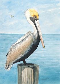 pelican_smaller.jpg
