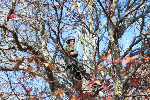 Arborist-Tree-Services-Horowhenua.jpg
