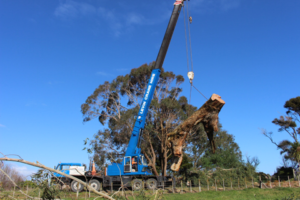 Tree-removal-with-crane-Ohau.jpg