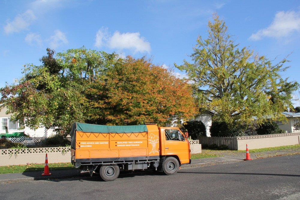 Tree and Garden Services - crown reduction