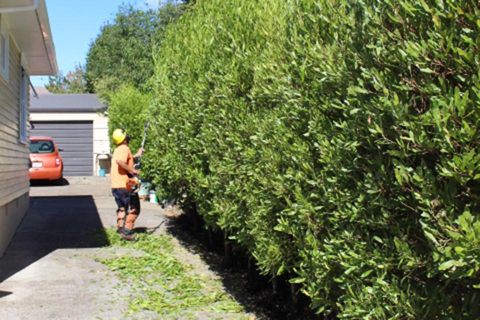 02-Hedge-trimming-Horowhenua.jpg