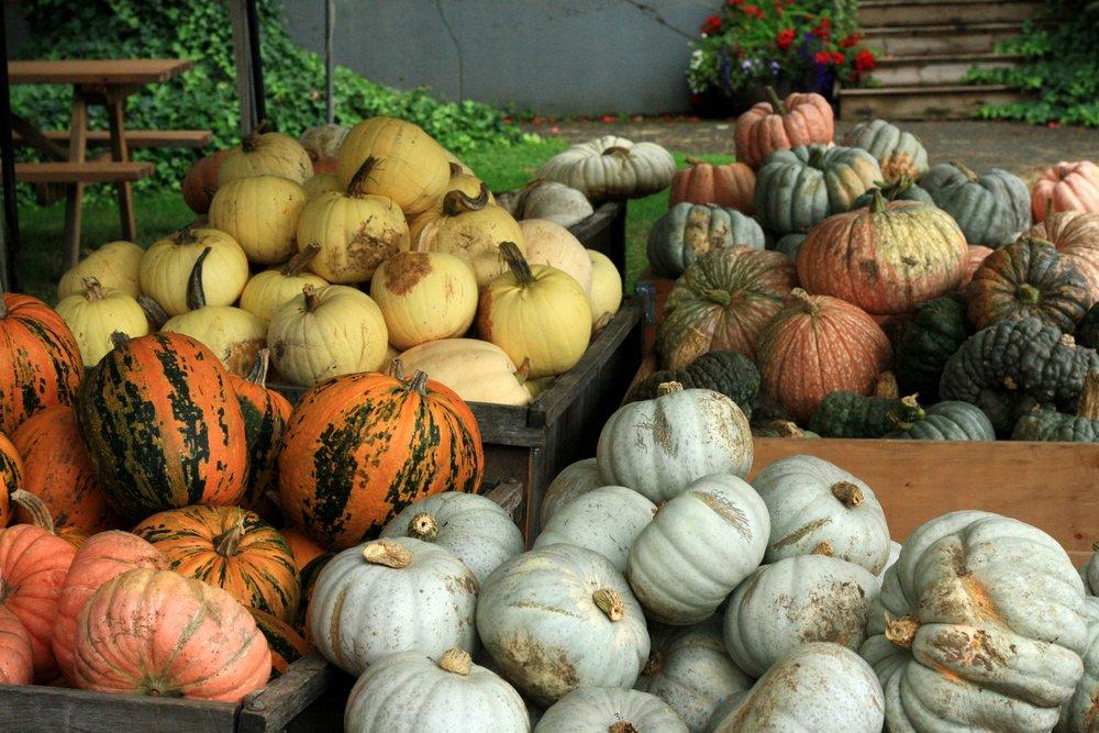 Willowview Farms Pumpkins!