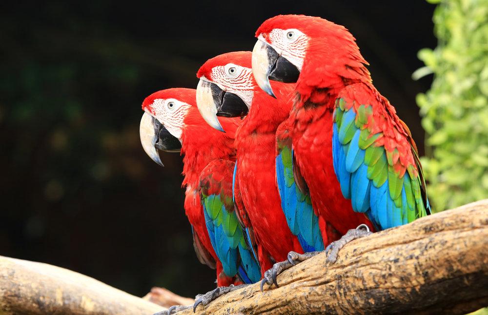 Exotic Bird - Avian Specific