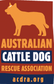 Australian Cattle Dog Rescue Association