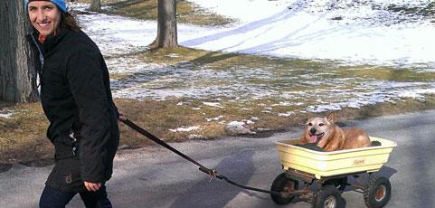 senior-dogs-tmb.jpg