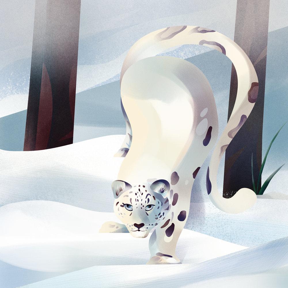 """Snow Leopard"" (Print)"
