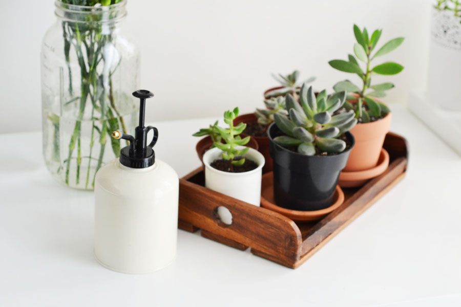 Although beautiful, a mister like this functions more like decor than a practical mister. And despite there being succulents in the photo:  they should not be misted!