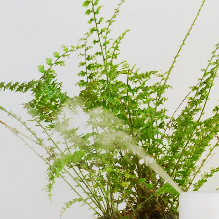 Watering1 6.jpg