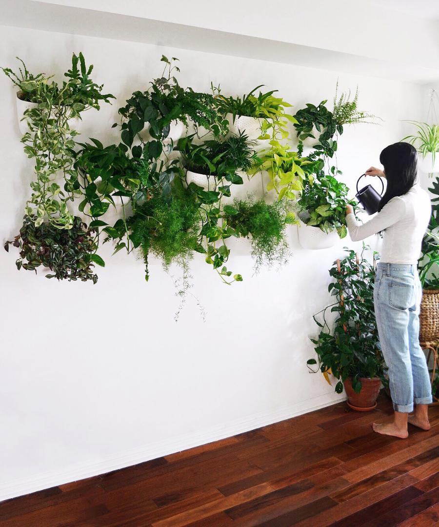 studioplants-wall.jpg