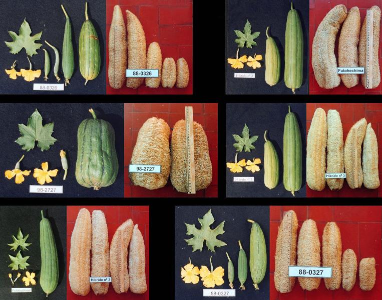Credit:  agricultura.sp