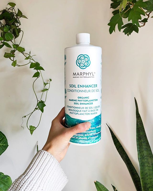 🌿GIVEAWAY!🌿 I'm thrilled to be working with @marphylco to offer a sweet (well, technically salty) bundle for you and your plants. ⠀ We are giving away: 1L Marine Phytoplankton soil enhancer, 1 unique Phytoplankton Sea Salt and 1 liquid Sea Salt. ⠀ To enter: ⠀ 1. Like this photo 2. Follow @marphylco and @studioplants 3. Tag a friend (one tag per comment, limit 5 entries) ⠀ Open to the US and Canada 🇺🇸🇨🇦. ⠀ Contest ends Friday, Nov 23th @ 11:59 p.m. (EST), winner announced via story. ⠀ If you peeped my stories and blog, you'll know that I've been using Marphyl's Soil Enhancer as part of my goal to switch to feeding my plants organically. Marphyl is a small family-owned company based in Vancouver with a mission of spreading the knowledge of the benefits of wild marine phytoplankton for the health of our bodies and our plants. 1% of all their sales are also donated to Mission Blue!