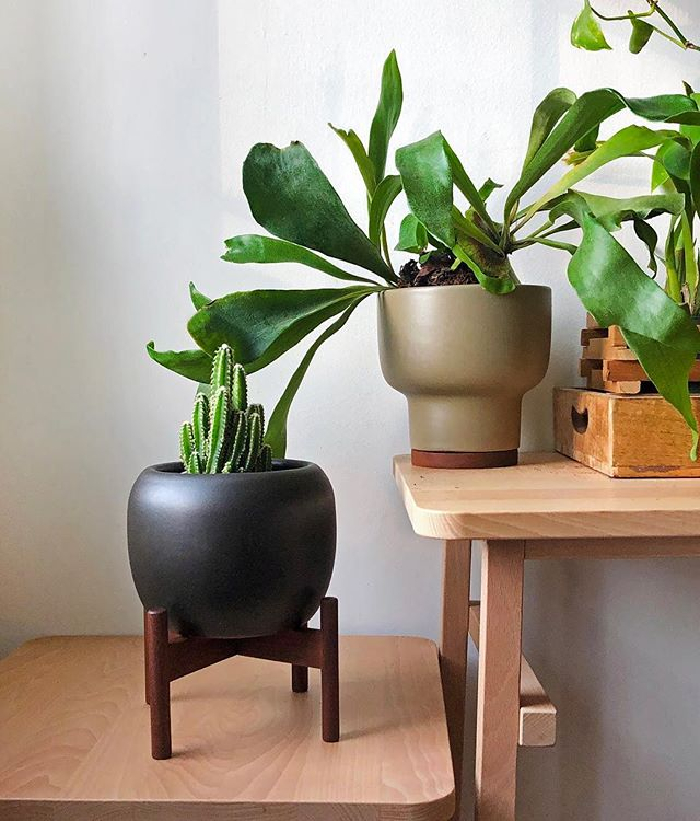 ✨GIVEAWAY✨ The iconic @modernica is giving away one Case Study Ceramics® Table Top planter in their *new* design: Drum, Mushroom, or Hex - color of your choice! ⠀ To enter: ⠀ 1. Like this photo 2. Follow @modernica and @studioplants 3. Tag a friend (one tag per comment, limit 3 entries) ⠀ Open to US and Canadian residents only 🇺🇸🇨🇦. ⠀ Contest ends Dec 12st midnight EST, winner announced via story. ⠀ Pictured here in my own Modernica collection is the Drum in charcoal and Mushroom in pebble. Goodluck 🤞🏼!