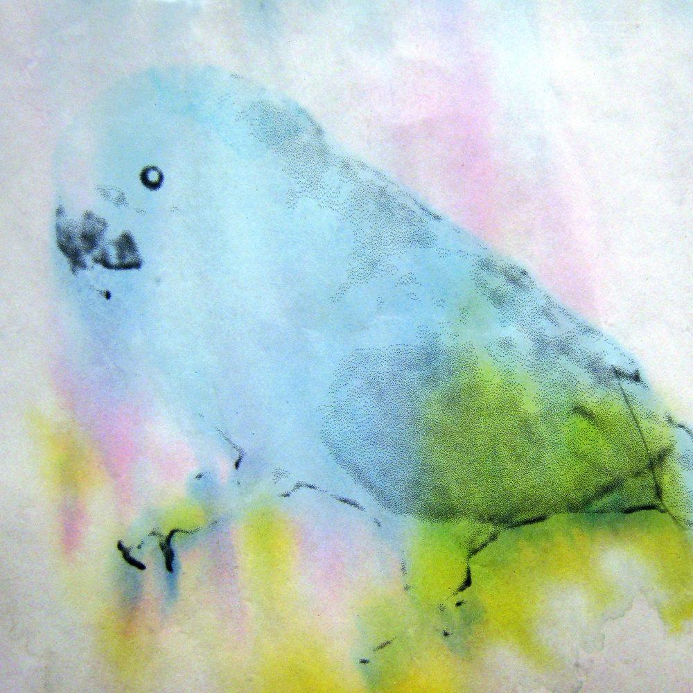 Turdbird