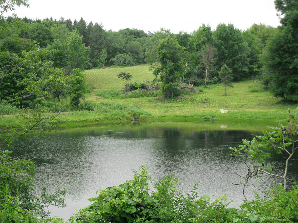 4992 Pond from Road looking West.jpg