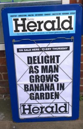 delight headline.PNG