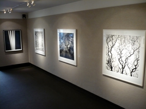 trees-of-life-mariana-cook-rod-dresser-weston-gallery-carmel.jpg