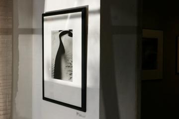 brett-weston-abstractions-weston-gallery-carmel.jpg