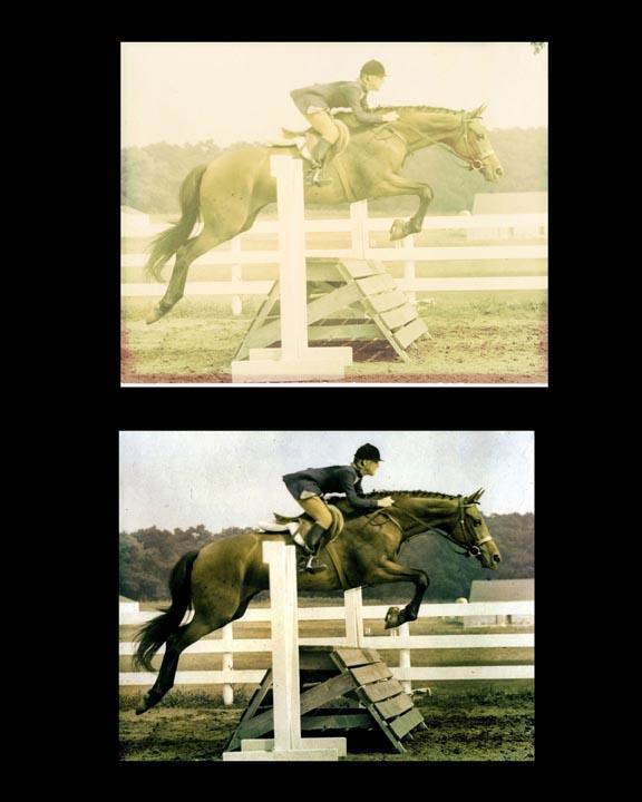 Quackebush_horse.jpg
