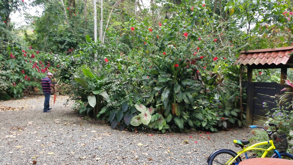 The garden at El Puente