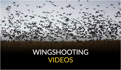 Wingshooting Videos