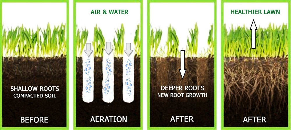 The photo shows the significance of aerating the soil for a lawn That same principle applies to compacted soil around trees.