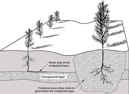 compacted-soil.jpg