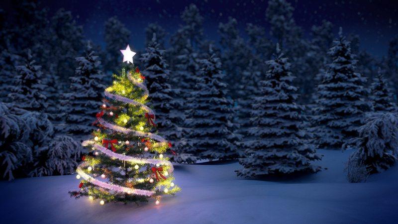 Christmas-tree-lit-in-woods.jpg