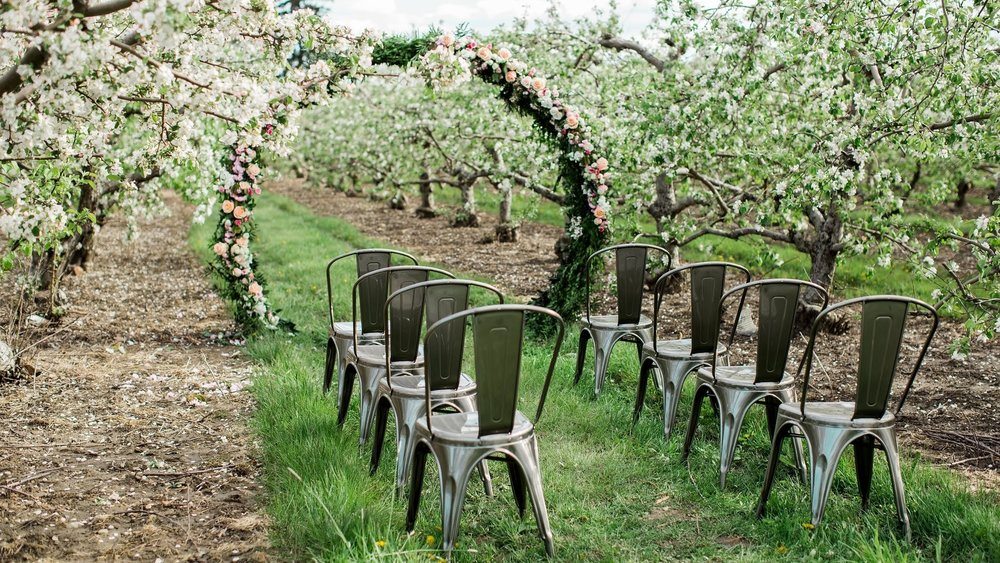 next gallery - Apple orchard wedding