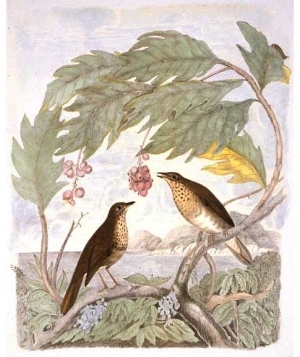 Birds of the Pacific Coast  by Andrew Jackson Grayson sparked imagination and ambition for the western side of the continent.