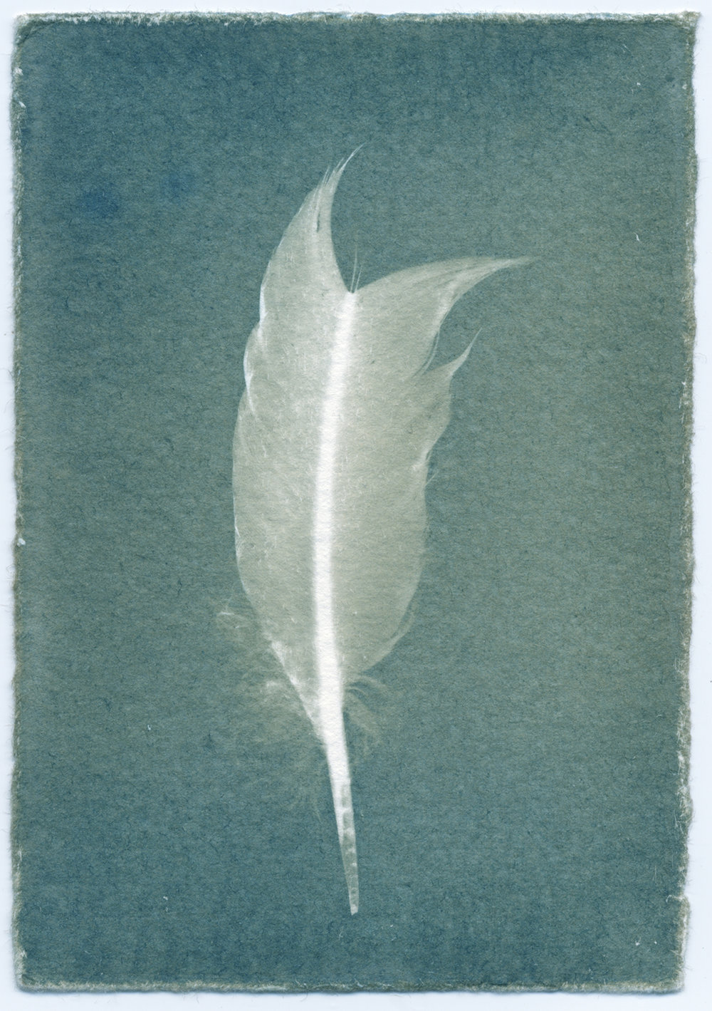 Feathers #09-1