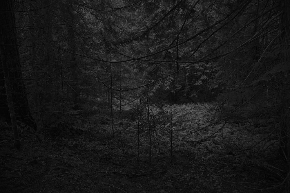 Silence, from the series The Forest