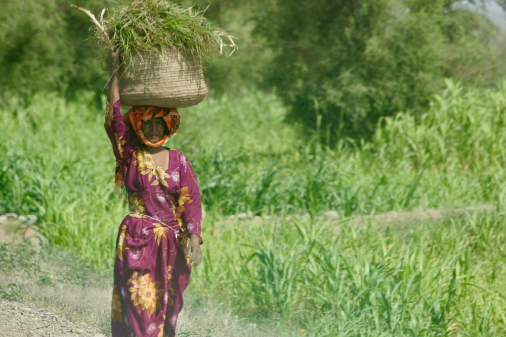 A WOMAN WORKING IN THE FIELDS -