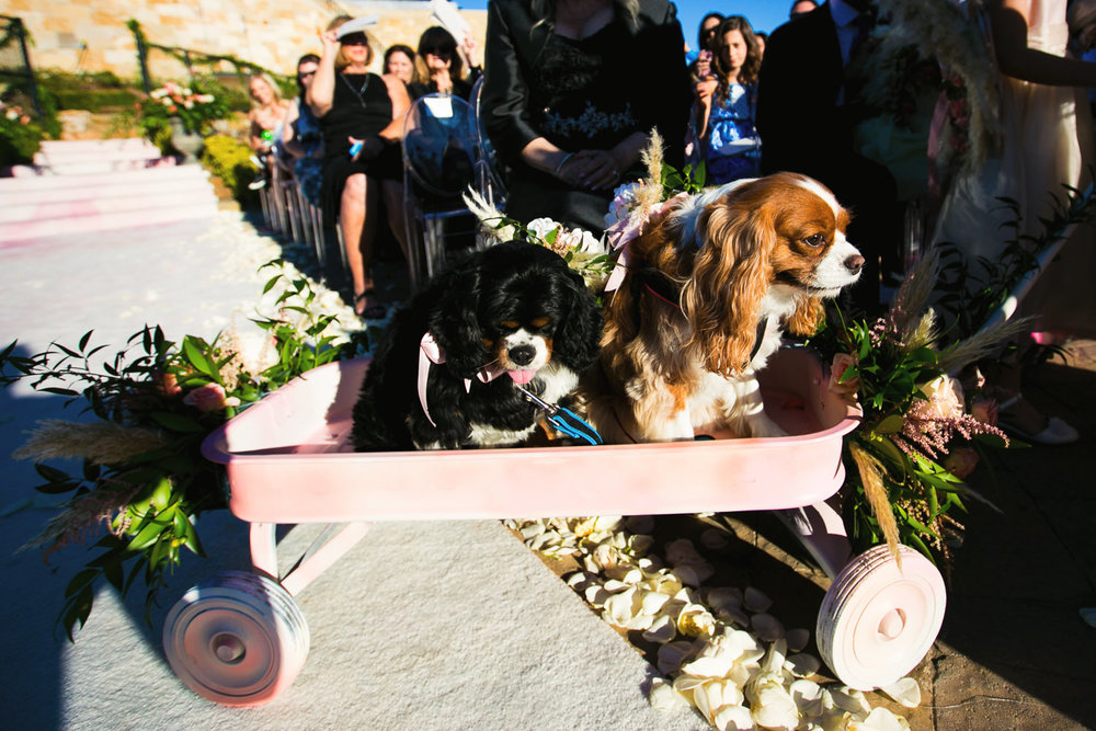 Cute photo of dogs at a Los Angeles Wedding in malibu
