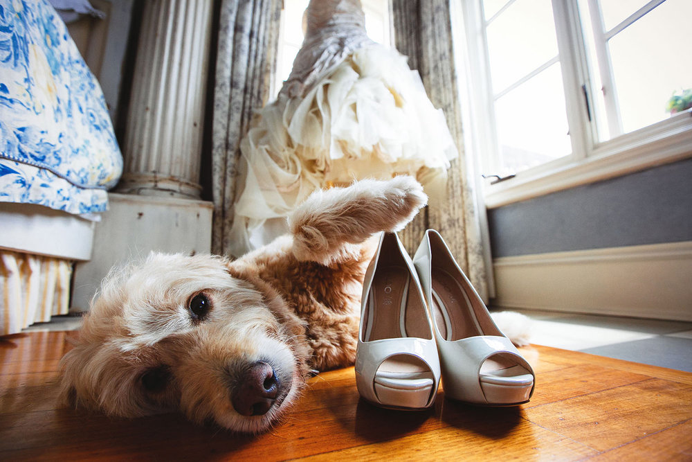 Dogs at weddings are hilarious - this dog is trying to get the bride's shoes
