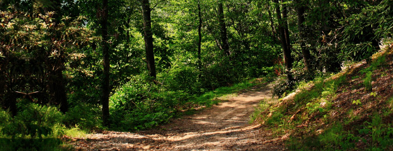 photos-activities-nature-walks