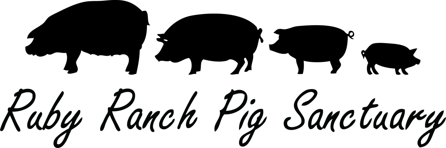 Ruby Ranch Pig and Farm Animal Sanctuary