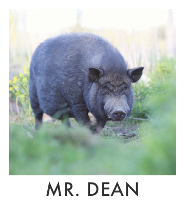 Mr. Dean.jpg