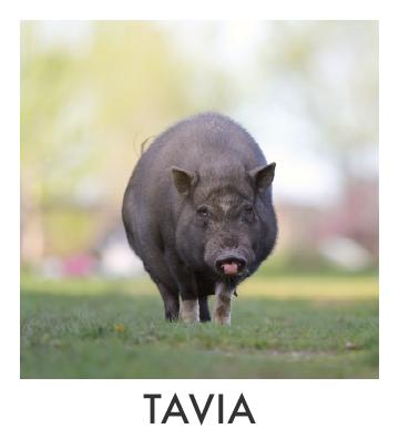 Tavia.jpg