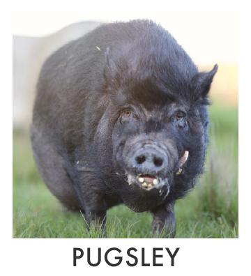 Pugsley.jpg