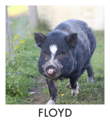 Floyd.jpg