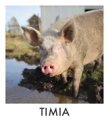 Timia.jpg